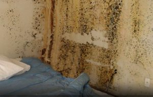 A GUIDE TO THE CAUSE AND EFFECT OF DAMPNESS IN RESIDENTIAL PROPERTY